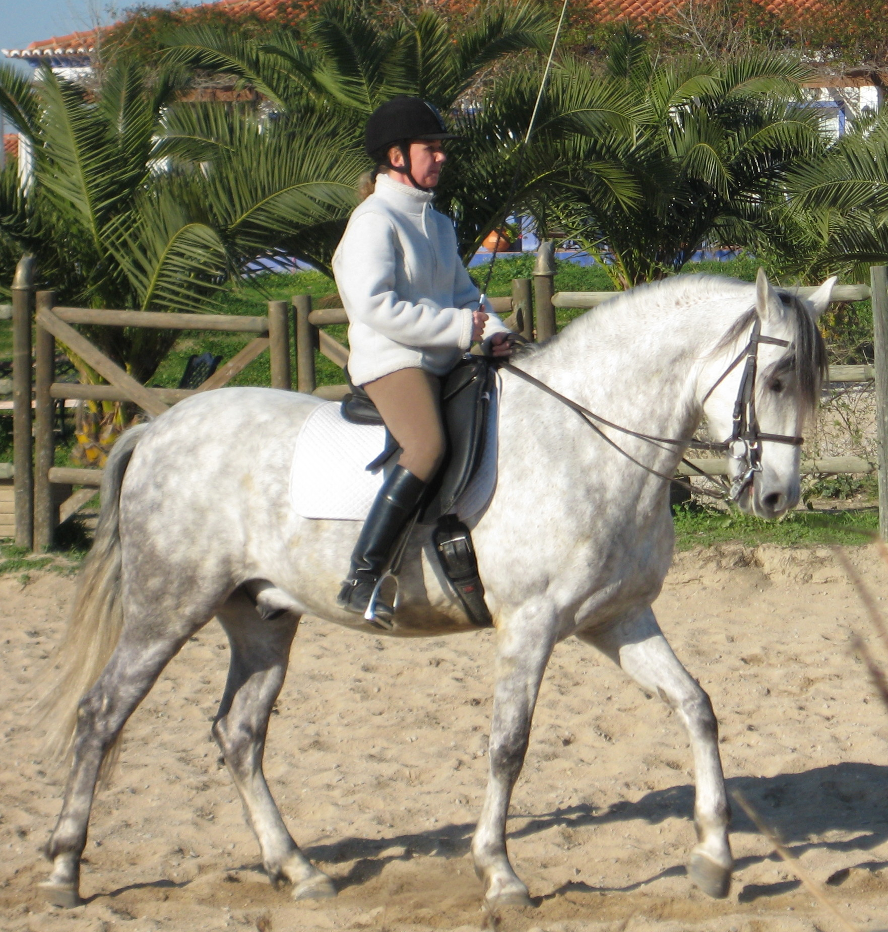 Andalusian Horse Running On Beach